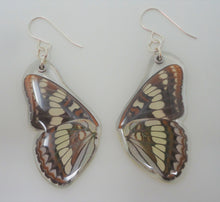 Lorquin's Admiral Butterfly Resin Earrings