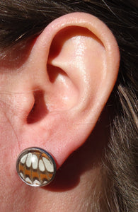 Lorquin's Admiral Post Earrings
