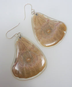 Madagascan Bullseye Silkmoth Resin Earrings