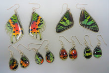 Madagascan Sunset Moth Resin Earrings