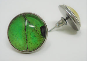 Male Green Birdwing Post Earrings