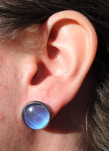 Blue Morpho Post Earrings