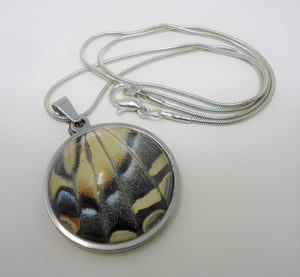 Western Tiger Swallowtail Pendant Necklace - Papilio rutulus