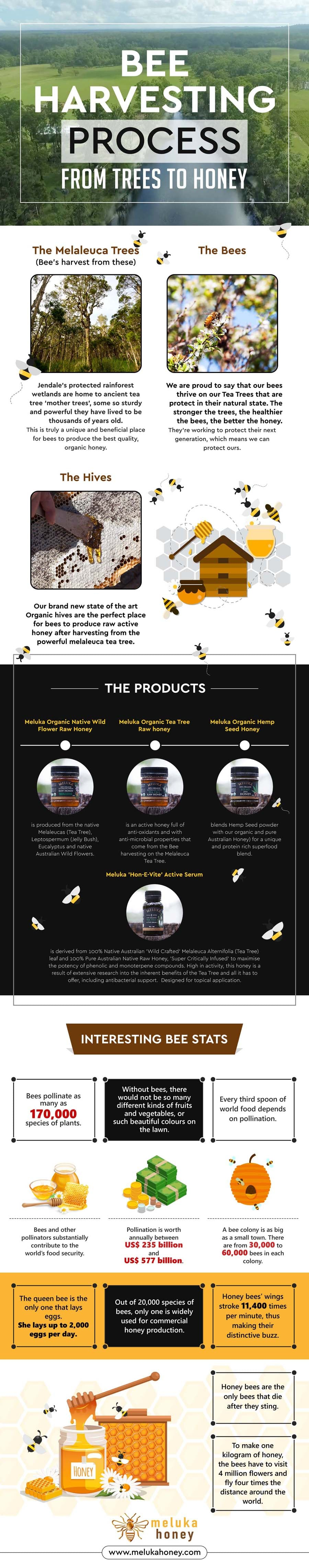 Meluka Honey - Bee Harvesting Process From Trees To Honey