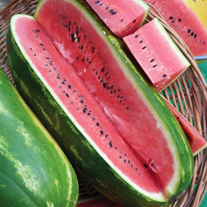 Melon- Jubilee Watermelon (Florida heirloom)