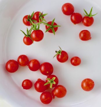 Tomato- Everglade Cherry (Florida heirloom)
