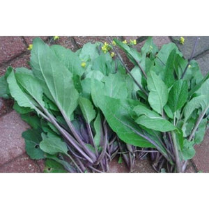 Flowering Brassica-Kosaitai Purple Choi Sum
