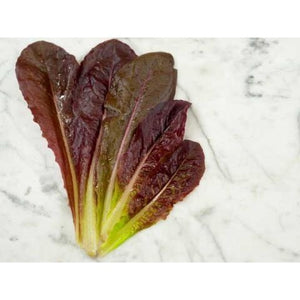 Lettuce-Red Romaine Head