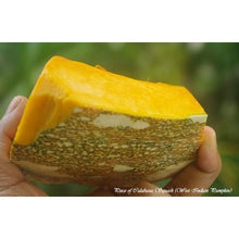 Squash-Calabaza Tropical Pumpkin