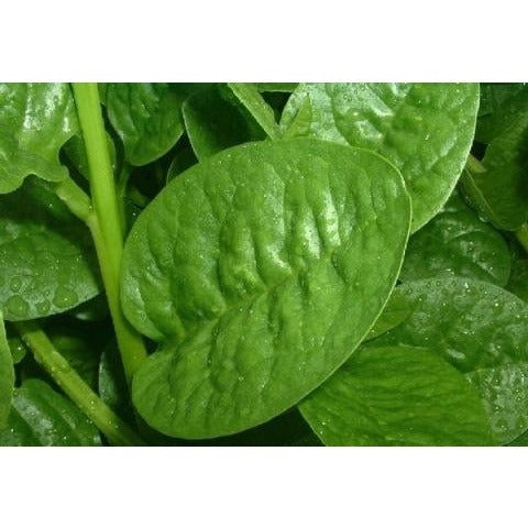 Spinach-Malabar Green Stem