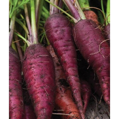 Carrots-Cosmic Purple