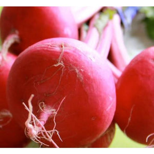 Turnip-Japanese Red Round