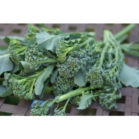 Broccoli-Green Sprouting Calabrese