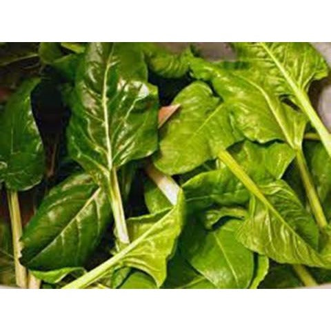 Chard-Perpetual Spinach Beet