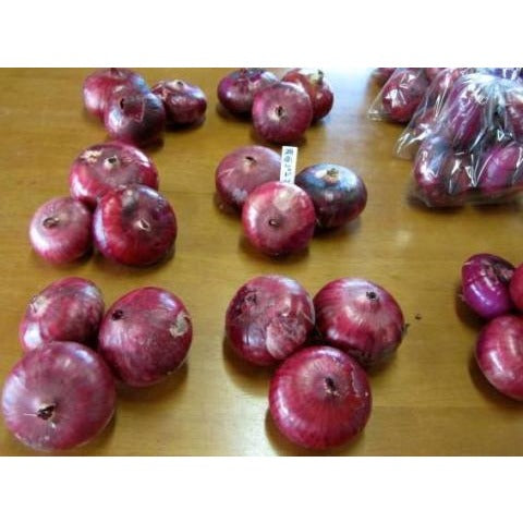 Onion-Shonan Red