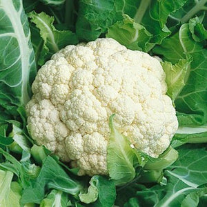 Cauliflower-Snowball