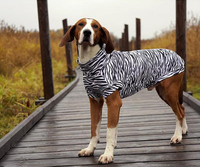 Business Insider chose UV & Bug Shirt as best protective dog clothing