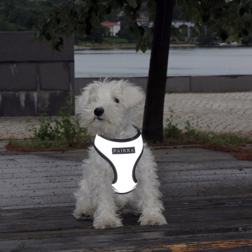 A small dof wearing PAIKKA visibility harness for dog