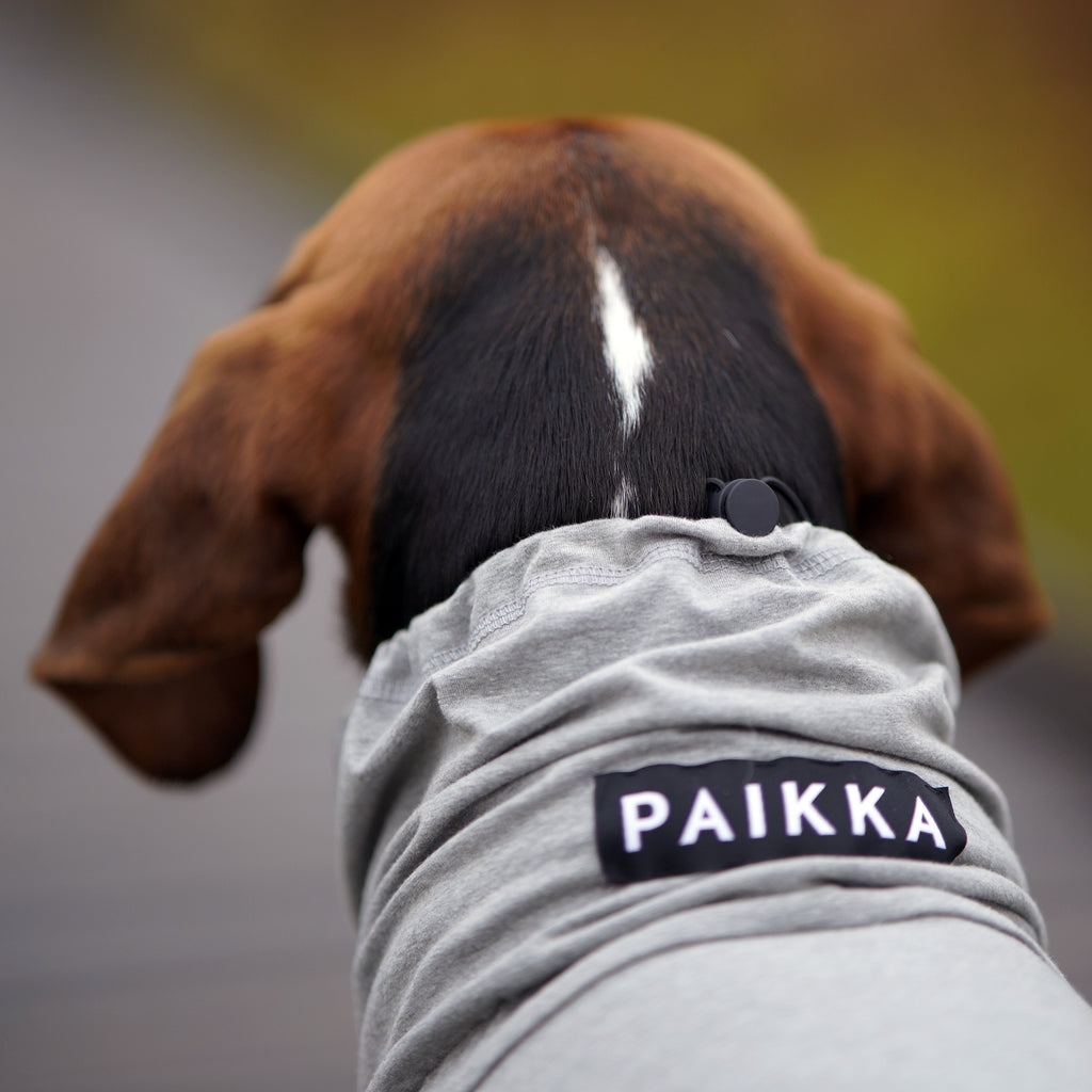 PAIKKA Recovery Overall for dog