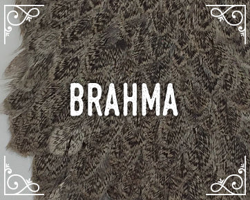 Whiting Brahma Hen Cape