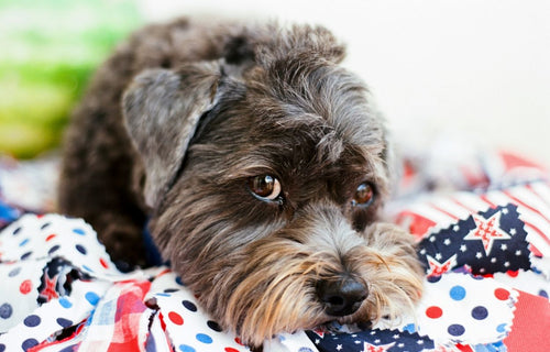Happy 4th of July from the Vital Pet Life family!