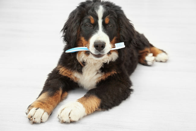 5 Easy Tips to Prevent Pet Dental Disease