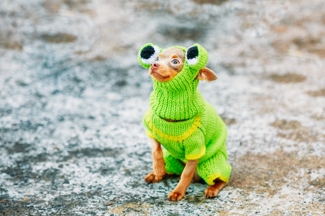 National Dress Up Your Pet Day!