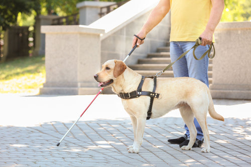 "They Are Guide Dog, Also Known as ""A Man's Best Friend"" - Here's Why"