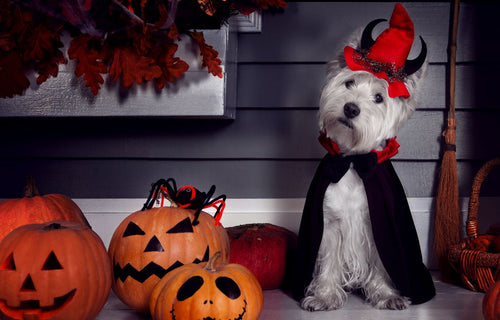 Halloween Activities for You and Your Fur-Baby
