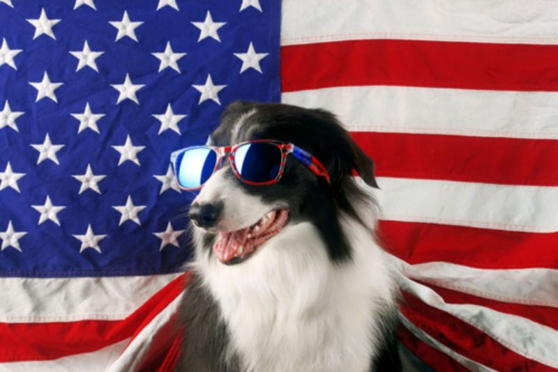 How to Celebrate Labor Day with Your Dog