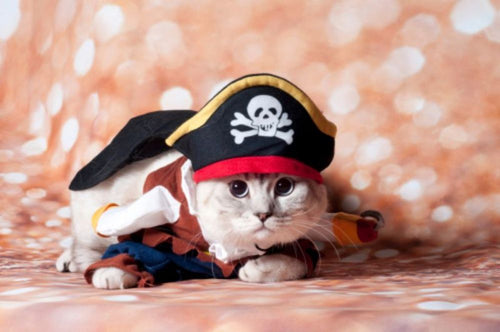 National Meow Like a Pirate Day September 19, 2020