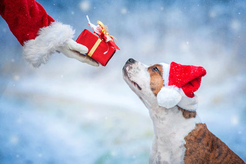 "Merry Christmas, Happy Holidays from Vital Pet Life! ""Tis the Season of Giving and Helping"