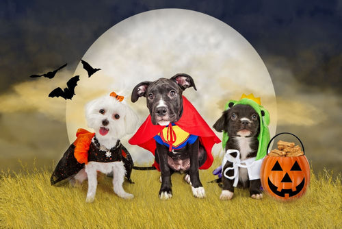 Trick or Treating During COVID with Your Dog