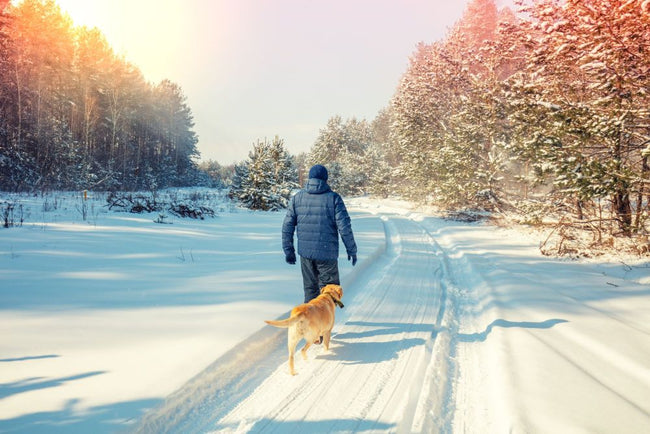 Celebrate National Walk Your Dog Month and Keep your New Year's Resolution