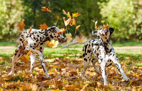 5 Tips to Keep Your Pets Healthy as the Season Changes to Fall