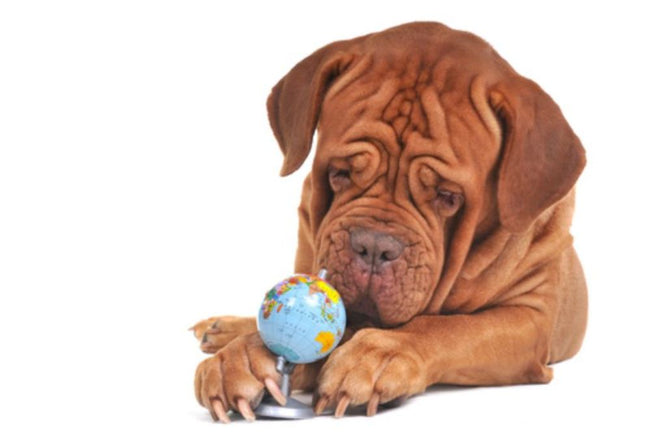 Why does sustainability matter for your pet's health?