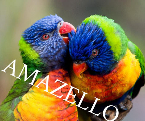 5D Diamond Painting Lorikeet Pair **exclusive collection**