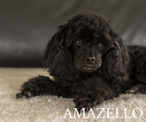 Image of 5D Diamond Painting Black Poodle