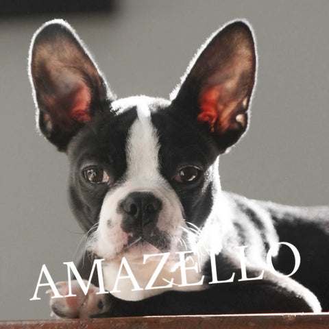 Image of 5D Diamond Painting Boston Terrier