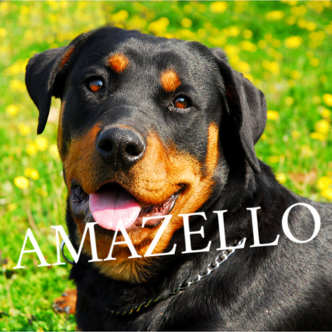 5D Diamond Painting Happy Rottweiler