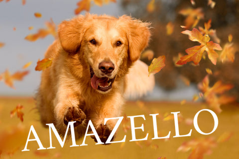 Image of 5D Diamond Painting Jumping Golden Retriever in the Fall