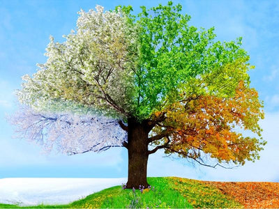 5D Diamond Painting Four Season Tree