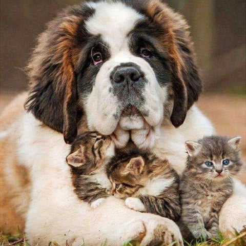 Image of 5D Diamond Painting Saint Bernard and Kittens
