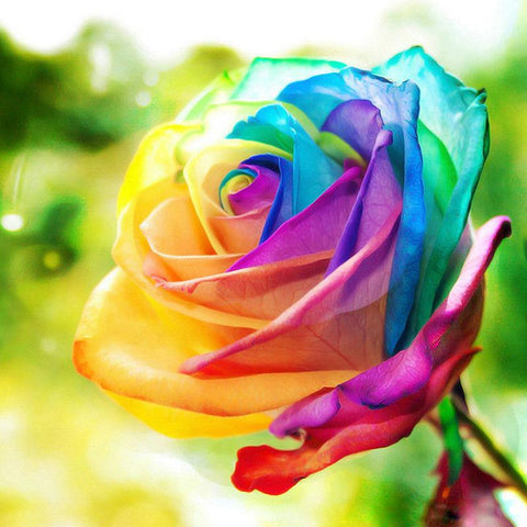 Image of 5D Diamond Painting Colorful Petals