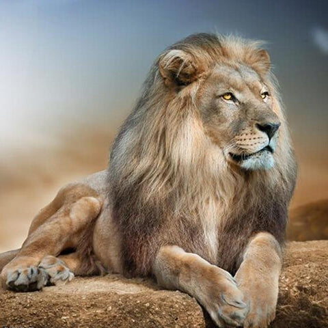 Image of 5D Diamond Painting Leo the Lion