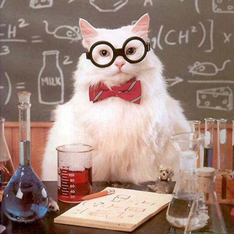 5D Diamond Painting Scientist Cat