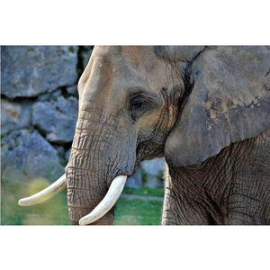5D Diamond Painting Single Elephant