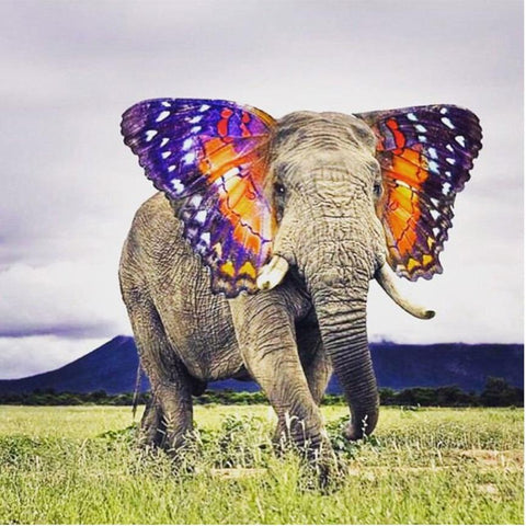 Image of 5D Diamond Painting Elephant with Butterfly Ears