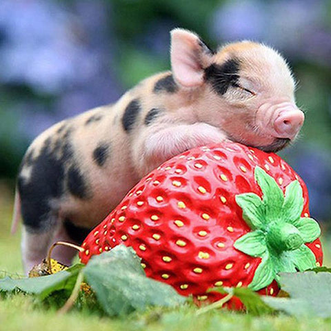 Image of 5D Diamond Painting Piglet and Strawberry