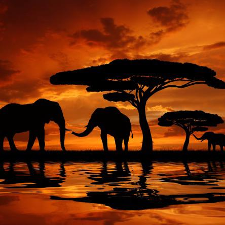 Image of 5D Diamond Painting Dawn African Elephant